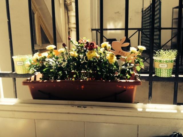 jardinière mini rosiers déco florale plantes aromatiques petit balcon.jpg