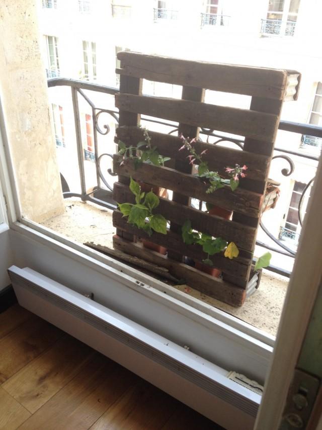 palette mur vegetal blacon fleuri plantes rampantes en pot