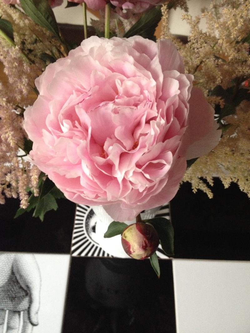 bouquet zoom détail pivoine rose poudre ouverte pétales délicats